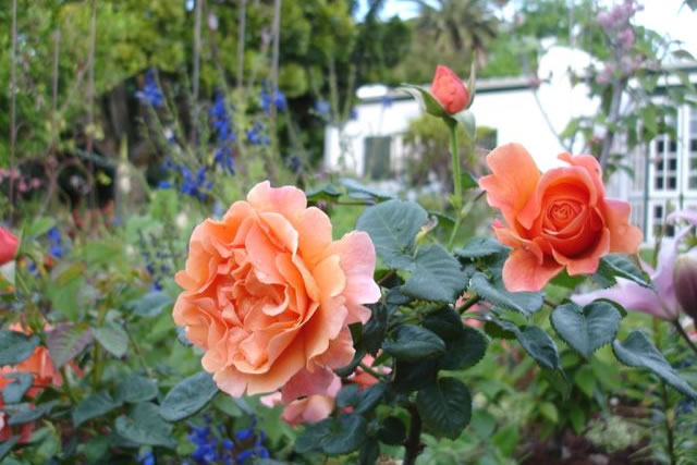 Chambray Estate Exquisite Gardens